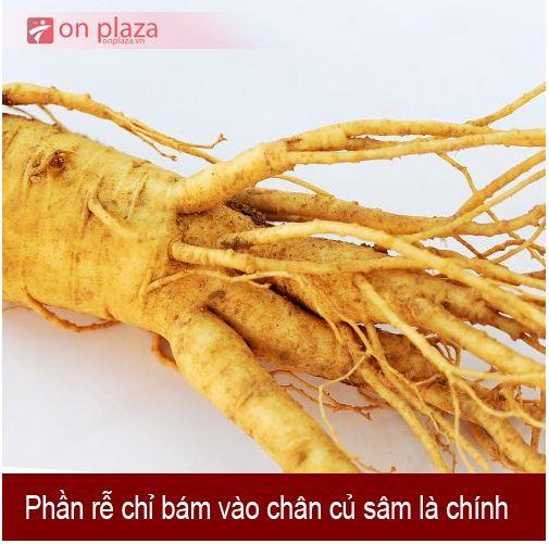 nhan-sam-han-quoc-loai-6-cukg 1