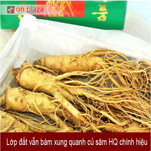 nhan-sam-han-quoc-loai-6-cukg 3
