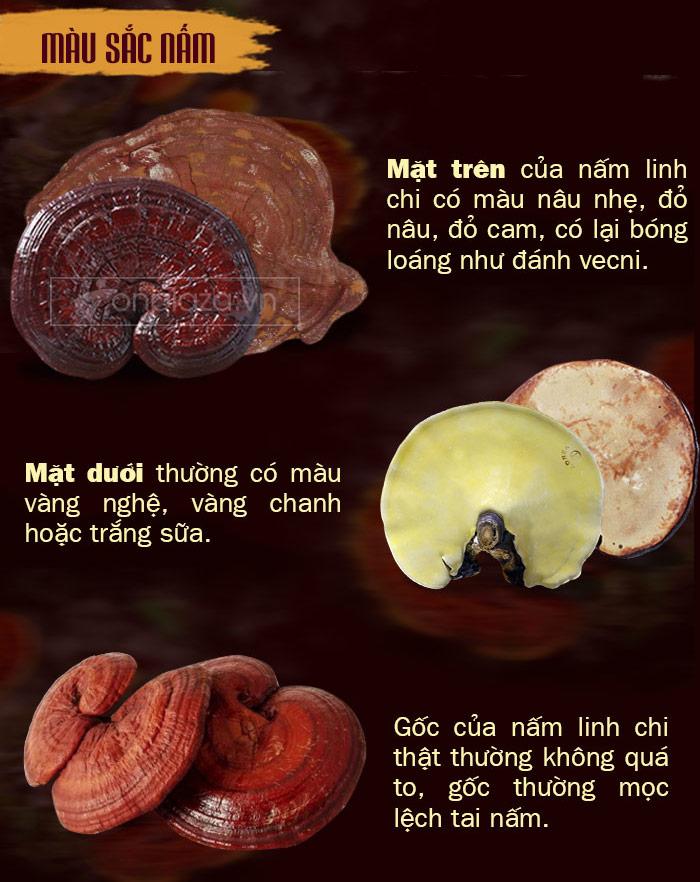 phân biệt nấm linh chi 2