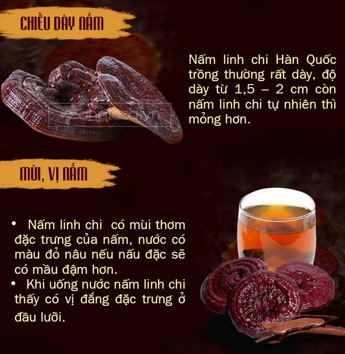 phân biệt nấm linh chi 4