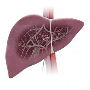 Nhân sâm giúp đào thải những mầm bệnh về gan