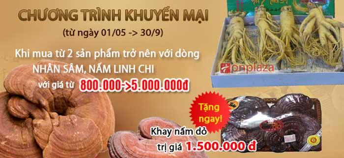 linh-chi-nhan-sam (1)