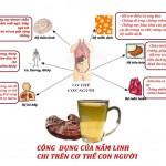 Tác dụng của nấm linh chi đối với cơ thể con người