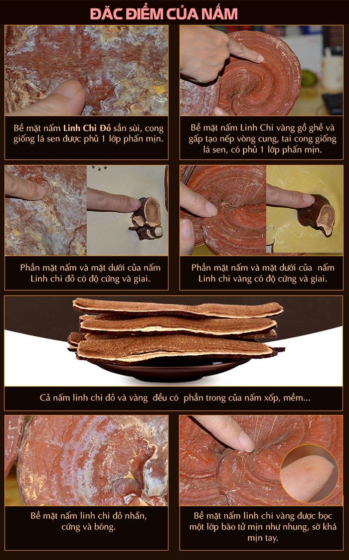 đặc điểm của nấm linh chi