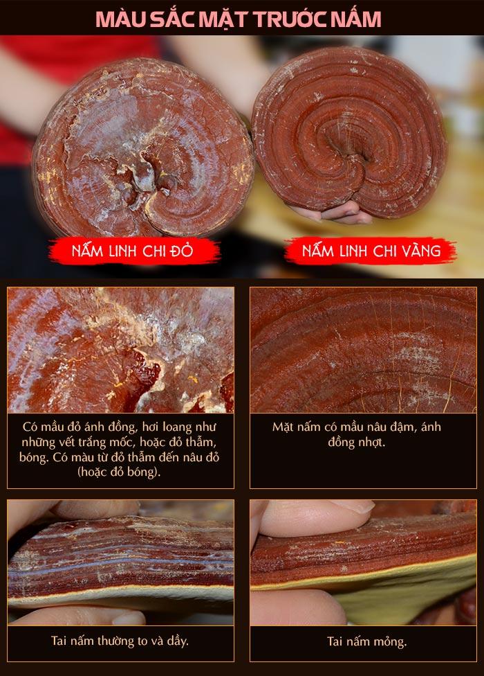 màu sắc nấm linh chi