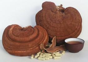 Nấm linh chi chữa bệnh tiểu đường