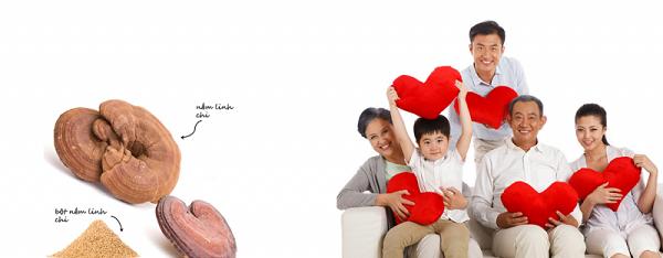 Nấm linh chi rất tốt cho người huyết áp thấp