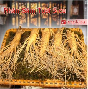 [Hình: nhan-sam-han-quoc-loai-5-cu-kg1-299x300.jpg]