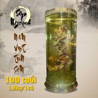 binh-sam-ngoc-linh-hang-tram-nam-tuoi-loai-19-kg-1-cu-NS186