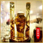 Bình sâm Ngọc Linh rừng tự nhiên 100% thượng hạng – 41 lít