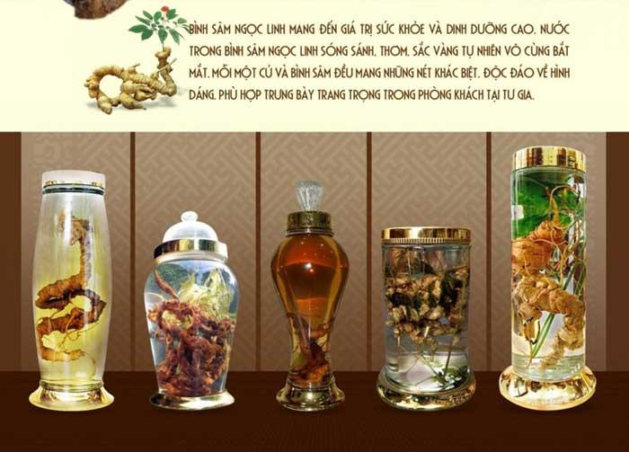 Ngâm rượu sâm Ngọc Linh núi tự nhiên hoang dã