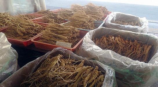 Khám phá khu chợ sâm nổi tiếng ở Hàn Quốc 1