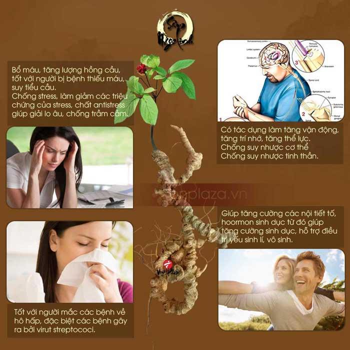 Sâm Ngọc Linh với bệnh cao huyết áp 1
