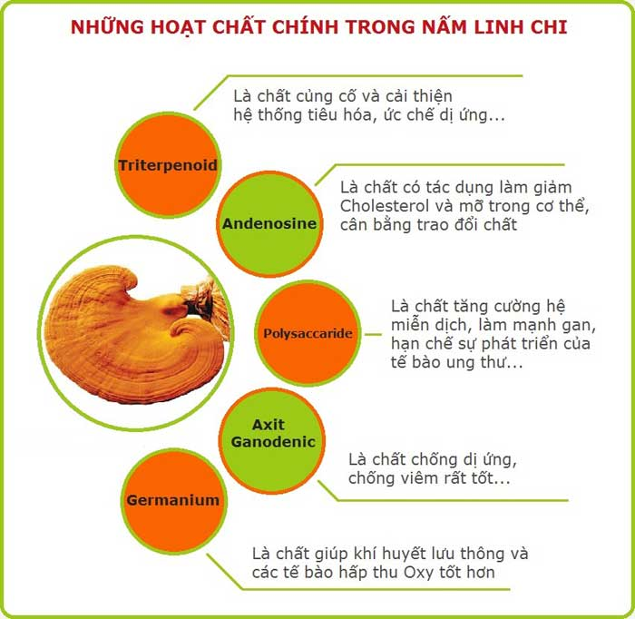 Cách sử dụng nấm linh chi Hàn Quốc tốt nhất 2