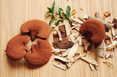 Giới thiệu cách làm món nấm linh chi hầm gà 2
