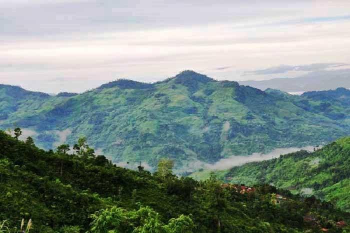 Sâm Ngọc Linh cứu nghèo cho huyện miền núi Trà Bồng 3