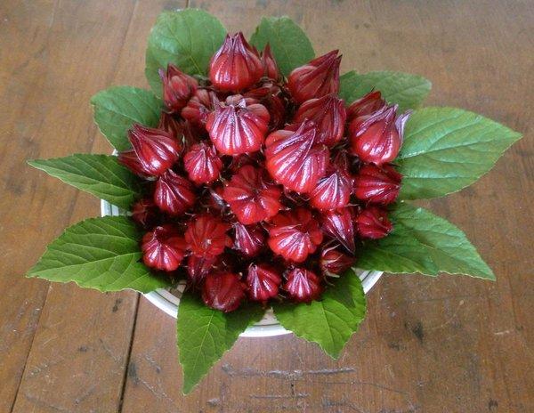 Cách làm rượu atiso đỏ thơm ngon bổ dưỡng 2