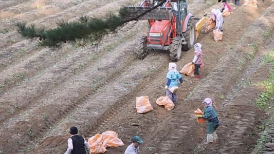 Nơi nào ở Hàn Quốc trồng nhân sâm tốt nhất 1