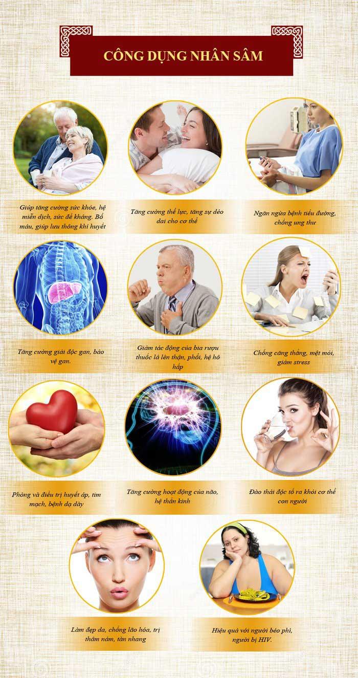Tác dụng của nhân sâm Hàn Quốc đối với sức khỏe 2