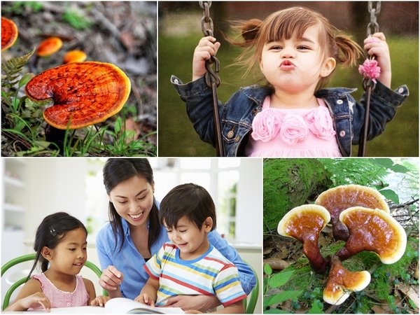 trẻ em dùng nấm linh chi có thể nâng cao sức khỏe