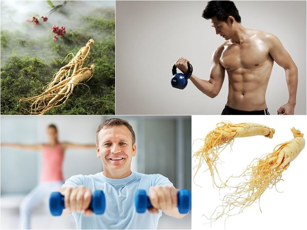 dùng nhân sâm cho đàn ông để tăng cường chức năng cơ thể