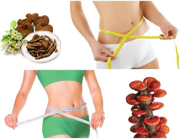 nấm linh chi có tác dụng tốt trong việc giảm cân