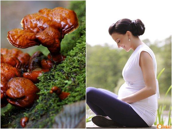 nấm linh chi tác dụng tốt với phụ nữ mang thai