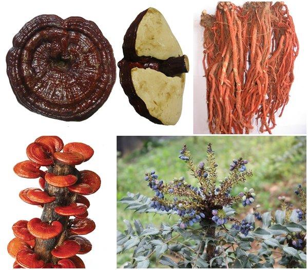 nấm linh chi và đan sâm là 2 nguyên liệu đại bổ