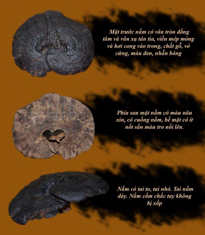 Nấm rừng hắc linh chi (loại to) L043 4