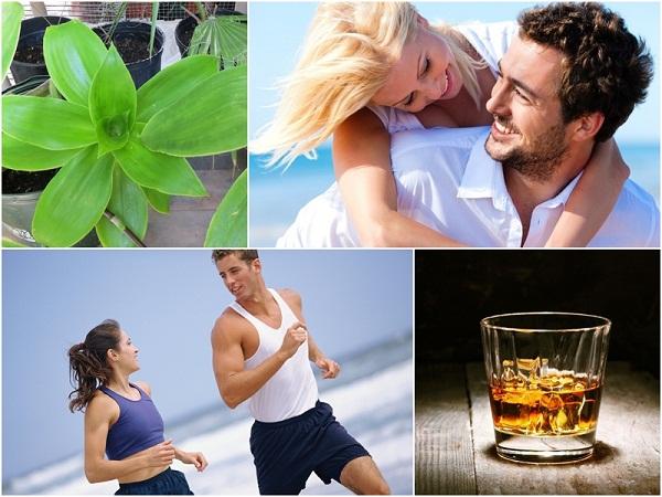 rượu cây lược vàng tốt cho sức khỏe người sử dụng