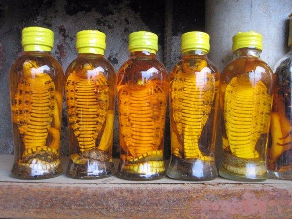 sử dụng rượu rắn hổ mang khoa học để tránh ảnh hưởng xấu