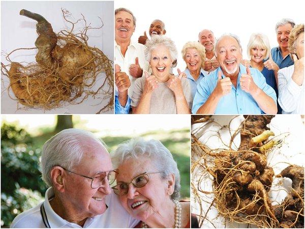 công dụng và cách chế biến sâm ngọc linh cho người già