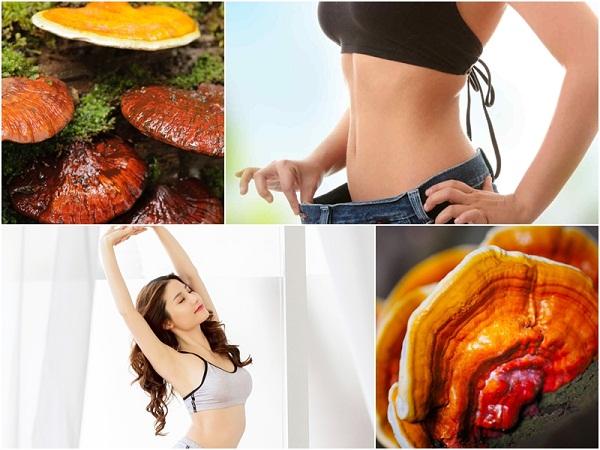 tác dụng của nấm linh chi trong giảm cân cải thiện vóc dáng