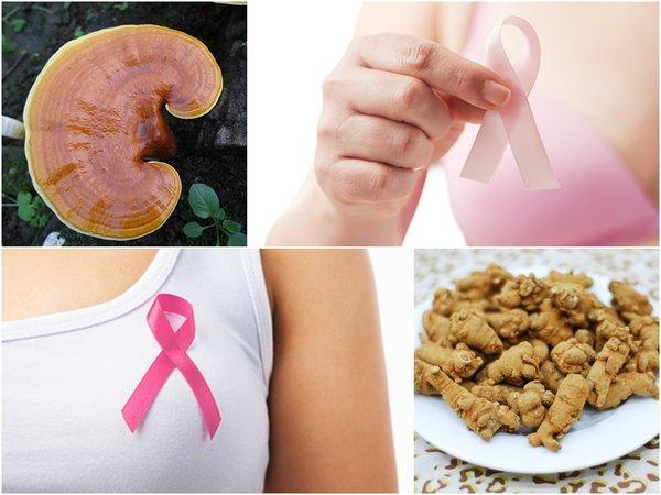 dùng nấm linh chi và tam thất để hỗ trợ điều trị ung thư vú