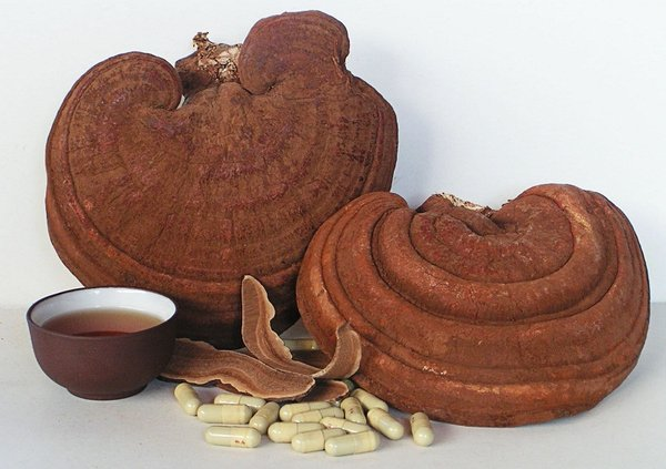 Mua nấm linh chi không rõ nguồn gốc xuất xứ, dùng nấm linh chi sai cách rất nguy hiểm