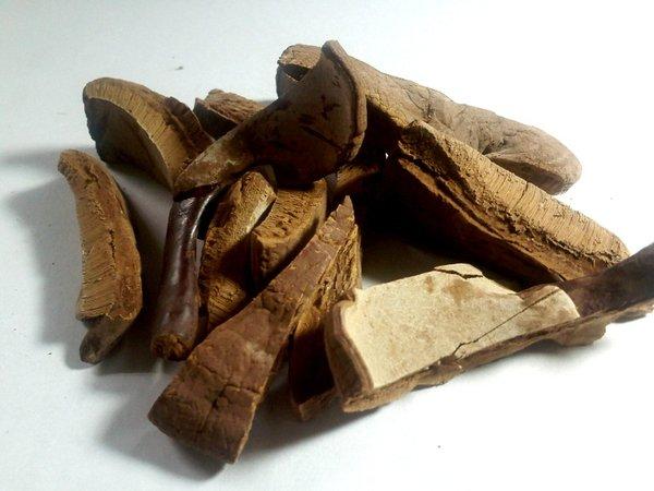 Nấm linh chi chứa nhiều thành phần hỗ trợ điều trị nám da