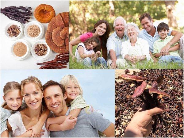 nấm linh chi và nấm lim xanh đều có công dụng tốt với sức khoẻ