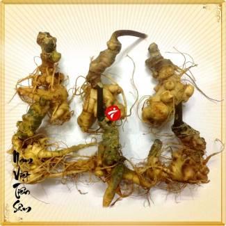 Sâm núi ngọc linh gieo trồng Quảng Nam loại 20 củ/kg NS342