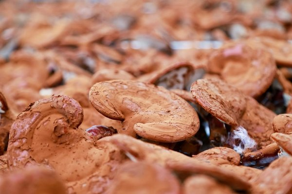 các loại nấm linh chi tốt trên thị trường hiện nay