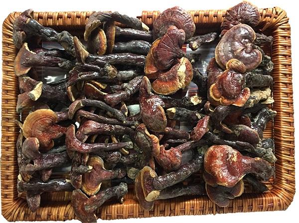 Nấm lim xanh Quảng Nam được sử dụng phổ biến