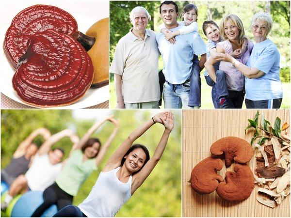 Nấm linh chi tốt cho sức khỏe người sử dụng