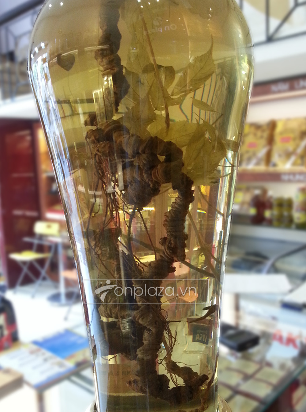 Bình sâm Ngọc Linh tự nhiên loại 2,4 kg/củ NS301 2