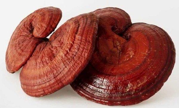 Nấm linh chi đỏ là loại nấm tốt