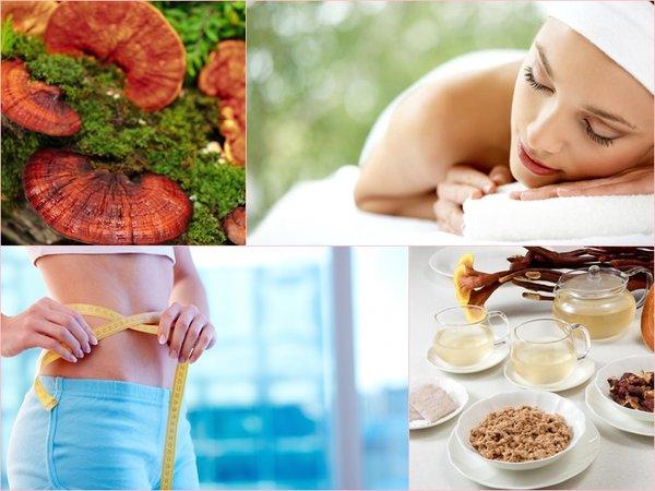 Nấm linh chi được áp dụng trong các liệu pháp giảm cân