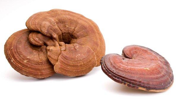 Tác dụng của nấm linh chi với phụ nữ tổng hợp từ thực tế
