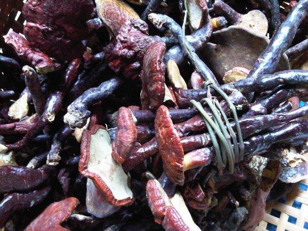 Sử dụng nấm lim xanh nuôi trồng đảm bảo