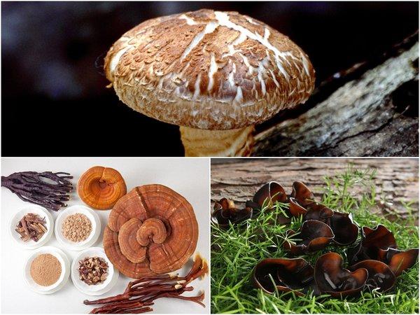 3 loại nấm giúp hạn chế lão hóa hiệu quả