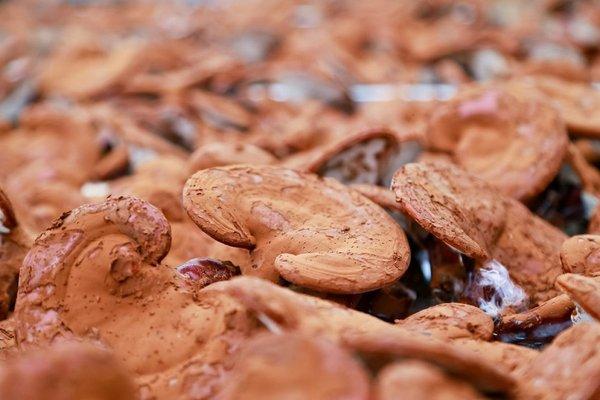 80% người tiêu dùng đang sử dụng nấm linh chi kém chất lượng