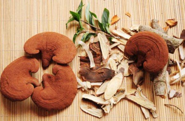 Nấm linh chi chứa nhiều dược chất quan trọng
