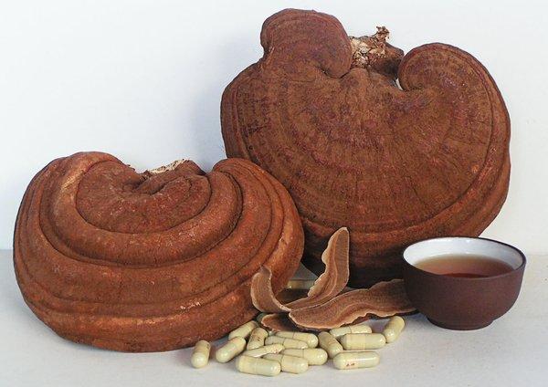 nấm linh chi được Trung Quốc bào chế thành dược phẩm quý